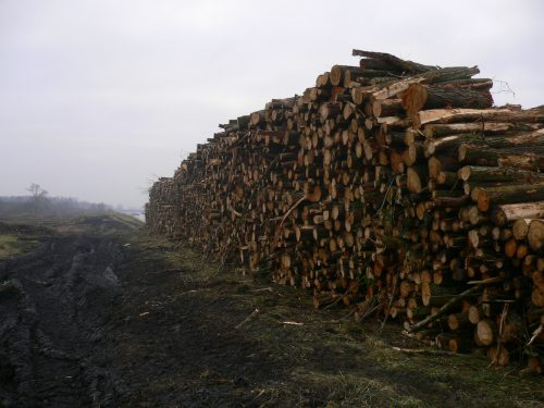 travaux-forestiers-bois-perilhon