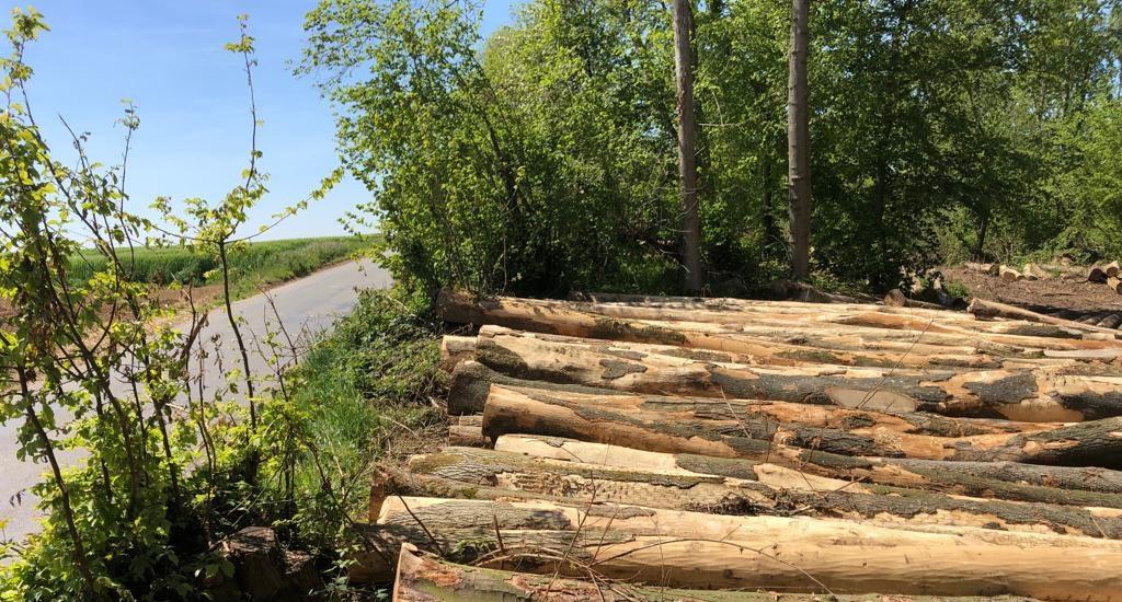 travaux-forestiers-perilhon