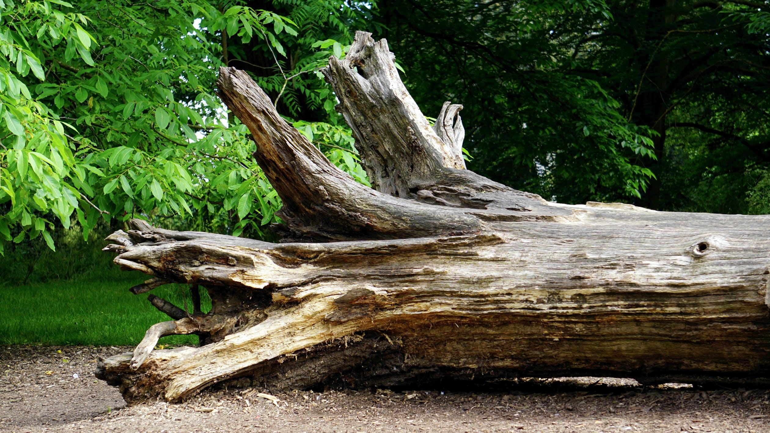 arbre et réglementation